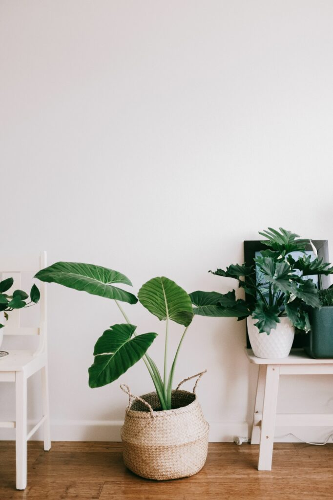 houseplants on a small budget